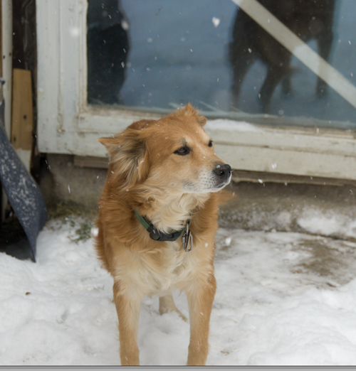 Akamaru seen many winters and hates it