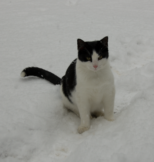 Tippy wonders why ground is white