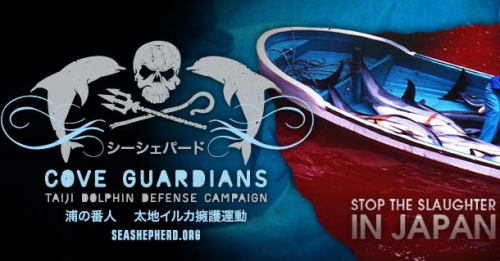 Japanese murder dolphins