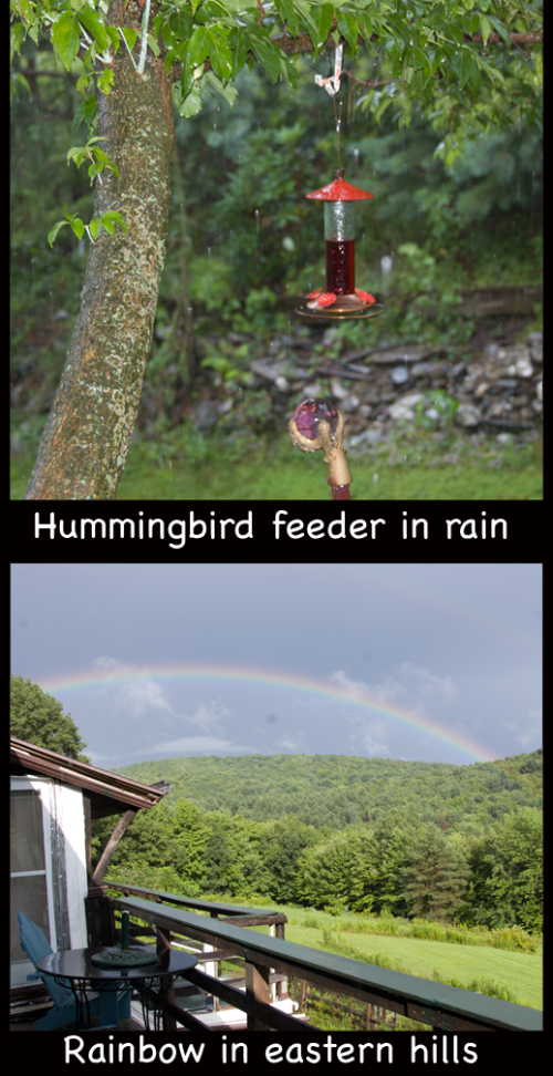hummingbird feeder in heavy rain and rainbow in eastern hills