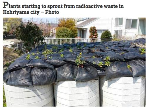 radioactive bags fukushima japan