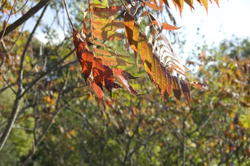 summer fall foilage 2014 Sept equinox